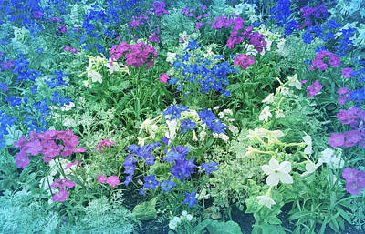 Photograph - Cool Blue Mixed Flower Garden by Aimee L Maher Photography and Art Visit ALMGallerydotcom