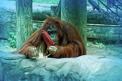 Photograph - Cool Blue Orangutan by Aimee L Maher Photography and Art Visit ALMGallerydotcom