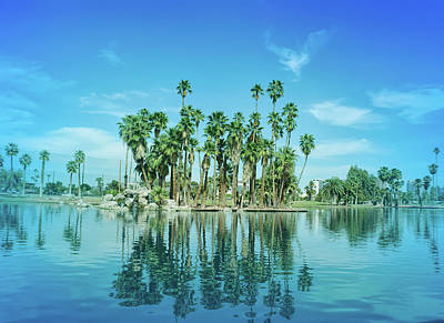 Photograph - Cool Blue Palm Tree Reflections by Aimee L Maher Photography and Art Visit ALMGallerydotcom