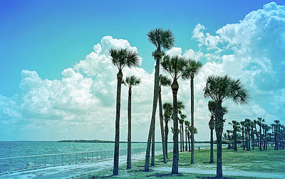 Photograph - Cool Blue Palms Blowing by Aimee L Maher Photography and Art Visit ALMGallerydotcom