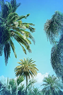 Photograph - Cool Blue Palms In The Sky by Aimee L Maher Photography and Art Visit ALMGallerydotcom