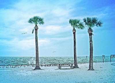 Photograph - Cool Blue Pine Island by Aimee L Maher Photography and Art Visit ALMGallerydotcom