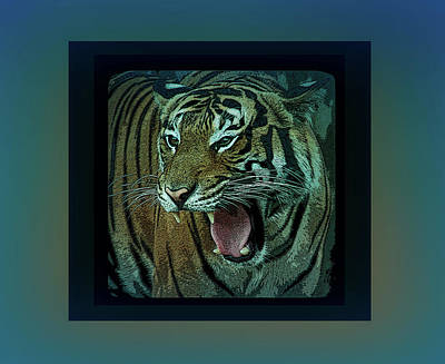 Photograph - Cool Blue Portrait Of A Tiger by Aimee L Maher ALM GALLERY