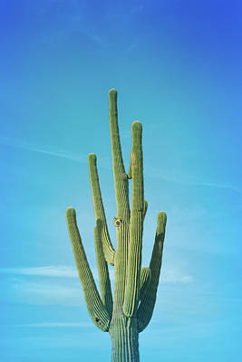 Photograph - Cool Blue Saguaro Cactus by Aimee L Maher Photography and Art Visit ALMGallerydotcom