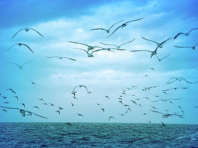 Photograph - Cool Blue Seagull Flight by Aimee L Maher Photography and Art Visit ALMGallerydotcom