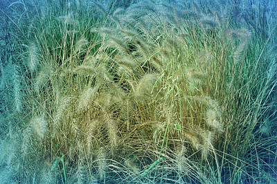 Photograph - Cool Blue Summer Wheat by Aimee L Maher ALM GALLERY