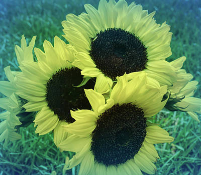 Photograph - Cool Blue Sunflower Bouquet by Aimee L Maher ALM GALLERY