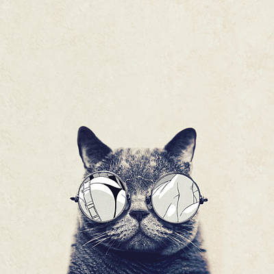 Glass Photograph - Cool Cat by Vitor Costa