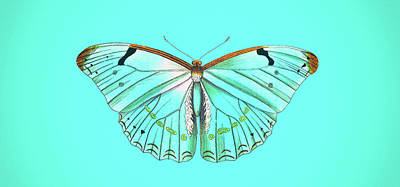 Digital Art - Cool Colorful Butterfly On Blue Background - Large Art  by Wall Art Prints