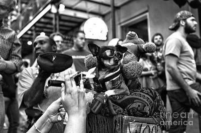 Cool Dog On Bourbon Street Mono Art Print by John Rizzuto