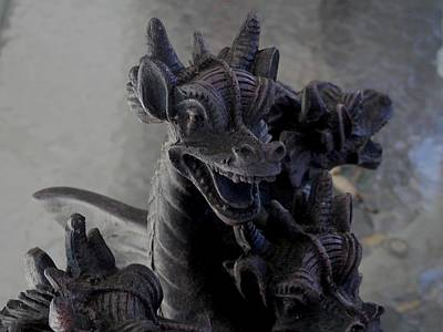 Photograph - Cool Dragons In Florida by Belinda Lee