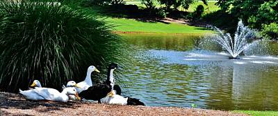 Photograph - Cool Ducks by Eileen Brymer