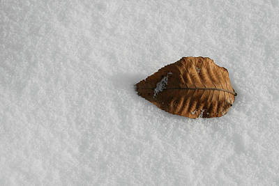 Photograph - Cool Leaf by Dylan Punke