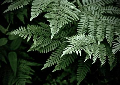 Photograph - Cool Shade And Ferns by Tim Good