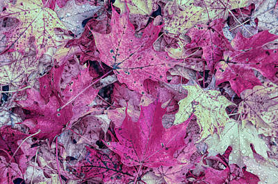Photograph - Cool Sunset Autumn Leaves by Aimee L Maher Photography and Art Visit ALMGallerydotcom