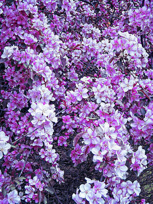 Photograph - Cool Sunset Beautiful Blossoms by Aimee L Maher Photography and Art Visit ALMGallerydotcom