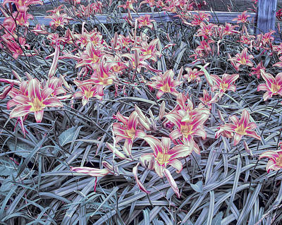 Photograph - Cool Sunset Field Of Tiger Lillies by Aimee L Maher Photography and Art Visit ALMGallerydotcom