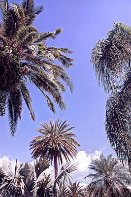Sunsets Photograph - Cool Sunset Palms In The Sky by Aimee L Maher Photography and Art Visit ALMGallerydotcom