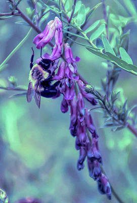 Photograph - Cool Sunset Pollination by Aimee L Maher Photography and Art Visit ALMGallerydotcom