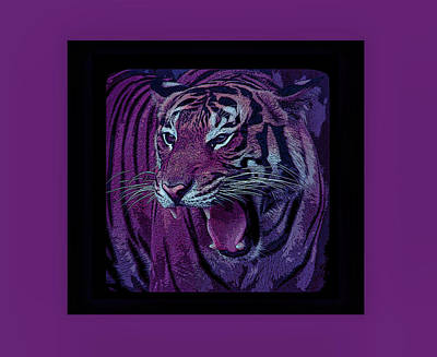 Photograph - Cool Sunset Portrait Of A Tiger by Aimee L Maher Photography and Art Visit ALMGallerydotcom