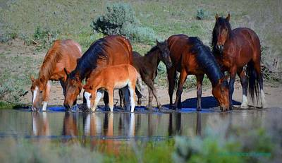 Photograph - Cool Water  by Jeanne  Bencich-Nations