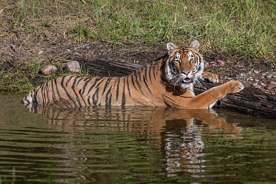 Photograph - Cooling Off In A Pond by Teresa Wilson