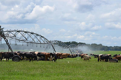 Photograph - Cooling The Dairy Cows by rd Erickson