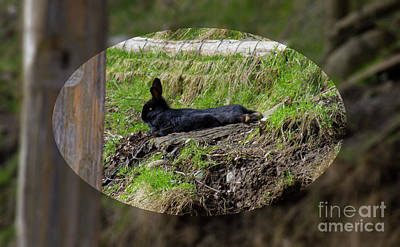 Photograph - Coombs Rabbit by Donna L Munro