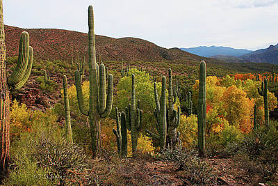 Coon Creek With Saguaros And Cottonwood, Ash, Sycamore Trees With Fall Colors Art Print