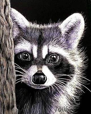 Drawing - Coon by Janet Moss