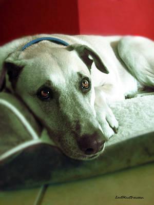 Buy Dog Art Digital Art - Cooper Goes Cute Artwork by Miss Pet Sitter