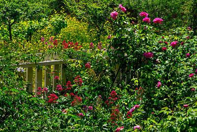 Photograph - Cooper/molera Garden by Derek Dean