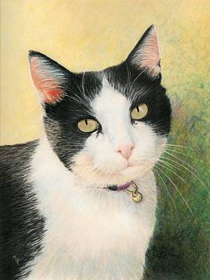 Drawing - Cooper The Most Handsome by Mary Rogers