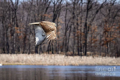 Photograph - Coopers Hawk 4 by Patrick Shupert