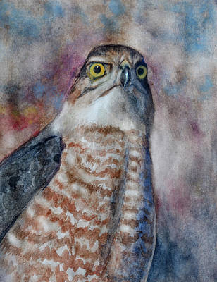 Painting - Coopers Hawk Wc by Rick Mosher