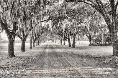 Old Country Roads Photograph - Coosaw Plantation Avenue Of Oaks by Scott Hansen
