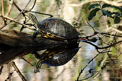 Photograph - Cooter Reflections by Debbie Oppermann