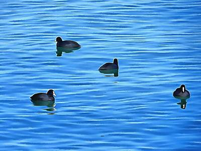 Photograph - Coots On Lago Trasimeno by Dorothy Berry-Lound