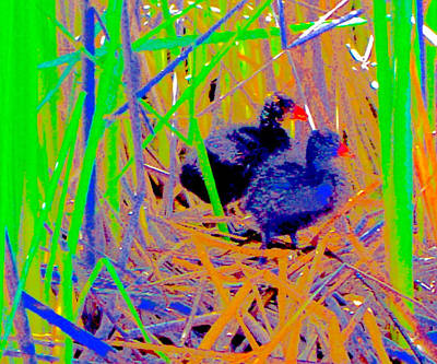 Thomas Kinkade Rights Managed Images - Coots on Their Nest Royalty-Free Image by Scott L Holtslander