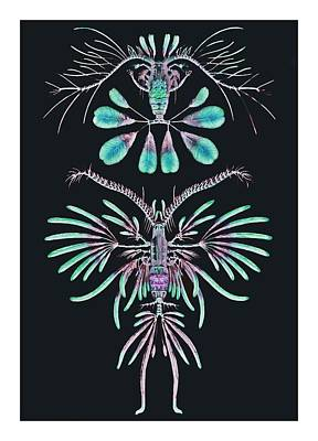 Haeckel Digital Art - Copepods With Feathery Shapes by Diane Addis