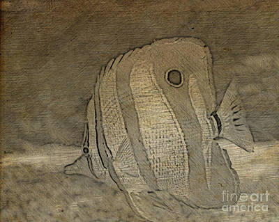Photograph - Copper-banded Butterfly Drawing by Steven Parker
