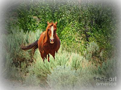 Photograph - Copper Beauty by Bobbee Rickard