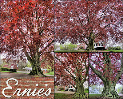 New England Photograph - Copper Beech Tree At Ernies by Janice Drew
