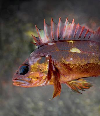 Photograph - Copper Fish by Adria Trail