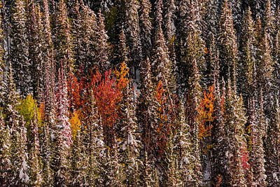 Photograph - Copse Of Color  by Dave Koch