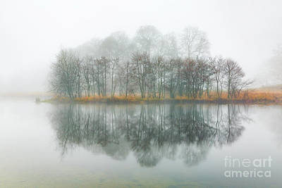 Copse Of Trees In The Mist Art Print