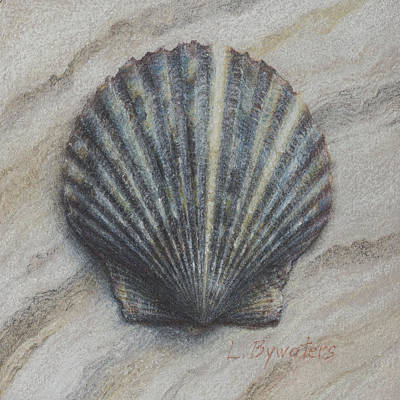 Seashell Drawing - Coquille Bleu by Lynn Bywaters