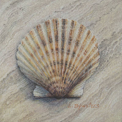 Coquille Rayee Art Print by Lynn Bywaters