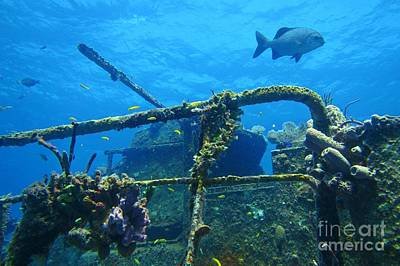 Coral And Fish On A Caribbean Shipwreck Art Print by John Malone