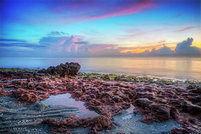 Photograph - Coral Beauty At Dawn by Debra and Dave Vanderlaan